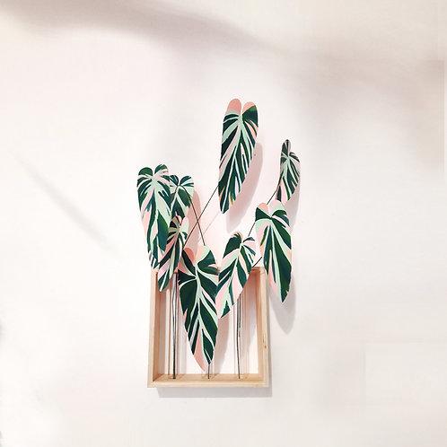 Vaso de Maranta Tricolor