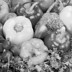 Korrektorat/Lektorat Website - Salus Ernährungsberatung