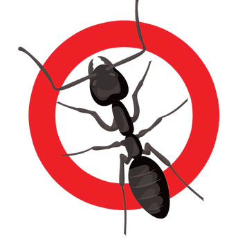 Carpentert Ants.png