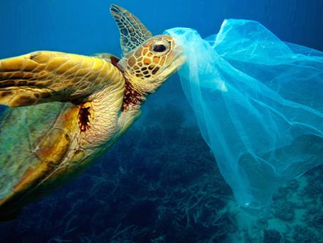 Uso e consumo das sacolas plásticas e o que temos a ver com isso