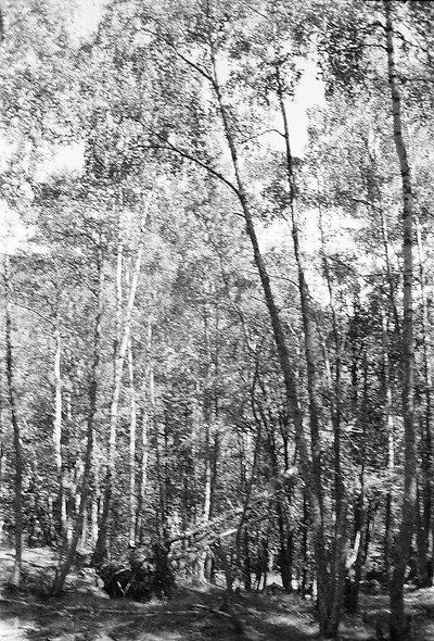 """Marie MONTEIRO n°44 bis """"forêt cachée"""""""