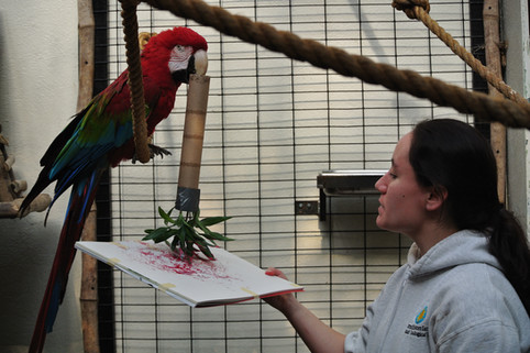 Hilary Colton with a green-winged macaw.