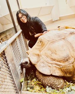 Jenn Donato with an aldabra tortoise.
