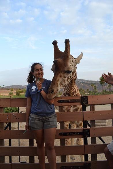 Victoria Dunch - giraffe 2.jpg