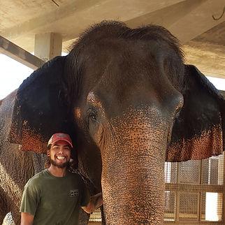 Matt Day - Elephant.jpg