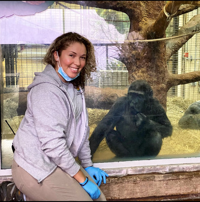 Carolina Powell with a western lowland gorilla.