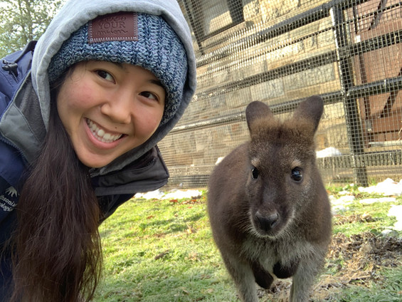 Chelia Chong with a Bennett's wallaby.