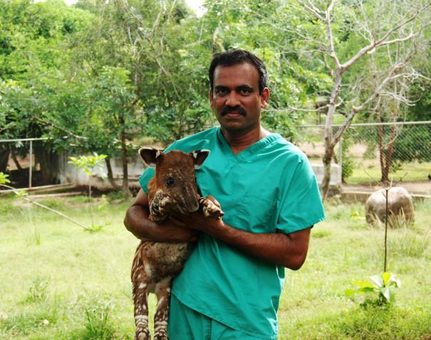 Budhan Pukazhenthi with a baby tapir.