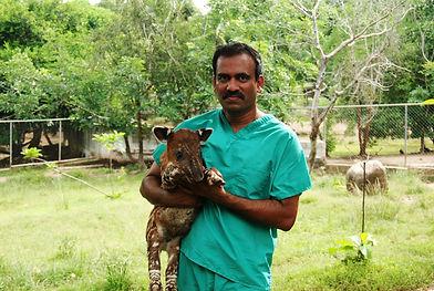 Buddha and Tapir (personal photo).jpg
