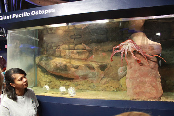 Donna Stockton with a baby Giant Pacific Octopus.