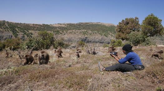Natalie Cash filming Gelada in Simien Mountains, Ethiopia.