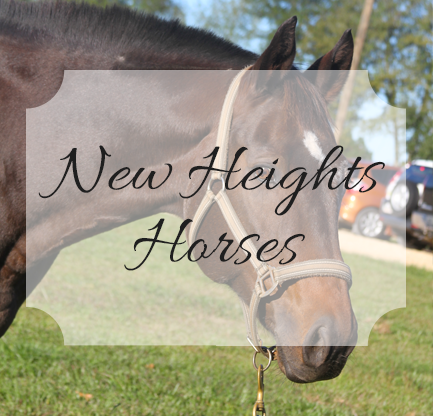New Heights Horses