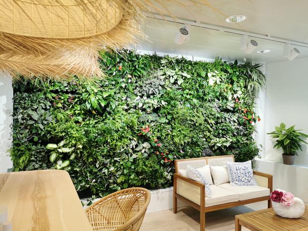 Mur végétal naturel vivant dans une clinique
