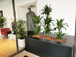 Plantes vivantes