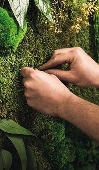 Cinquième étape du projet Végétal Tendance : l'entretien