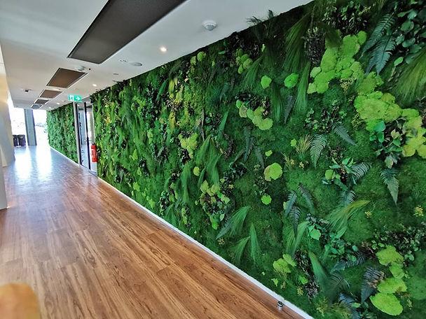Mur végétal stabilisé avec des fougères et des mousses