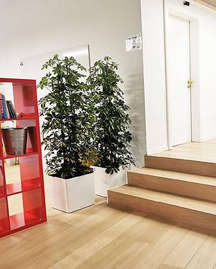 plantes en hydroculture bureaux