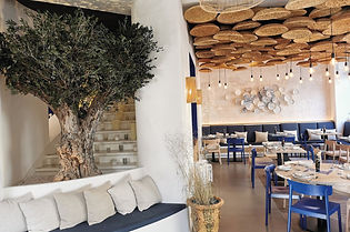 arbre olivier stabilisé