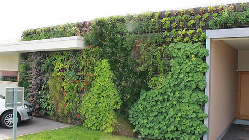 mur_vegetal_exterieur_entree_maison.jpg