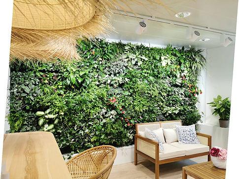 mur végétal naturel vivant
