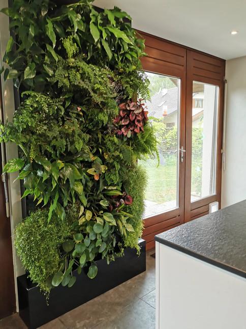 Mur végétal naturel vivant chez un particulier