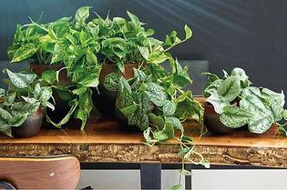 plante_naturelle_hydroculture.jpg