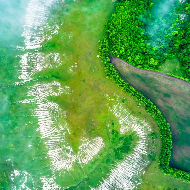 Зелёный: урочище Жостова Гора