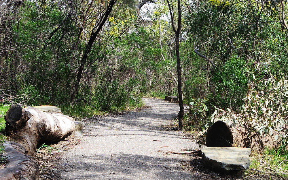Belair National Park has plenty of bike paths for you to ride your Me-Mover