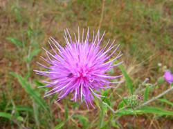 Spiked Flower