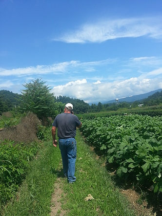 William Shelton Crop Inspection - Shelton Farms