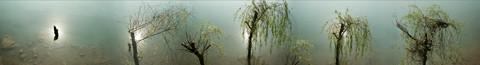 人间草木 皤滩