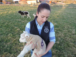 Harriet Palmer with lamb