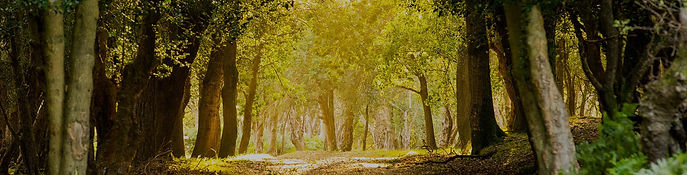 lg_New-Forest.jpg