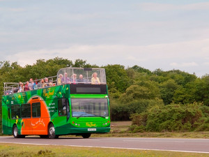 New Forest Tour Bus - The best way to see the New Forest!