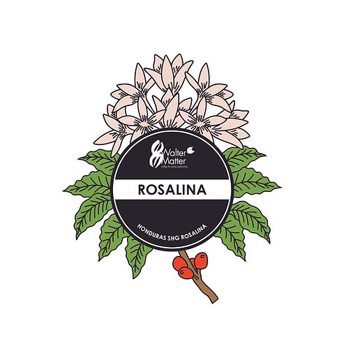 2020_logo_rosalina_couleur.jpg