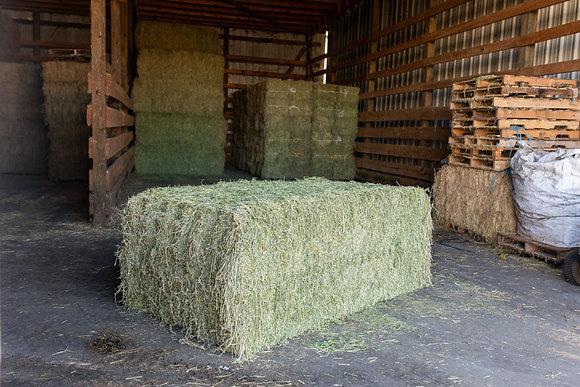 Alfalfa Horse Hay (large bale)