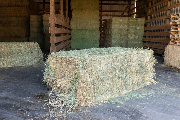 Timothy Hay (large bale)