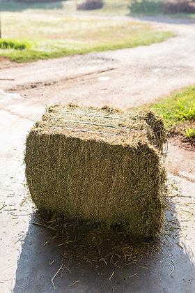 Alfalfa Horse Hay (small bale)