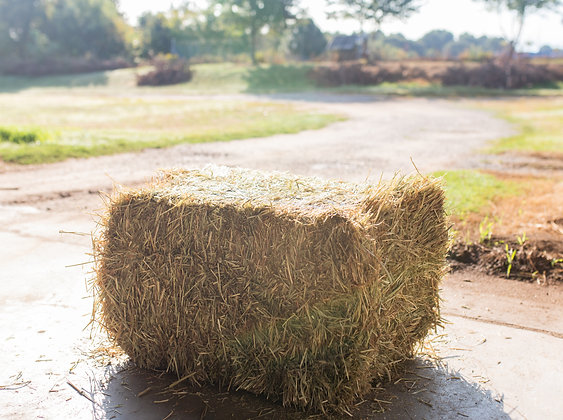 Timothy Hay (small bale)