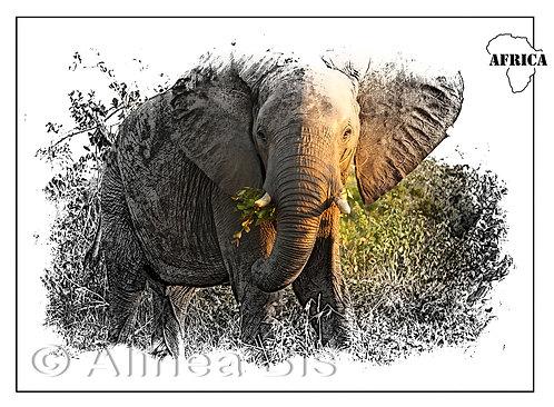 Africa 06