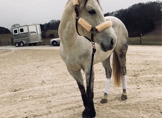 Meet Our Horses: No Bling Required