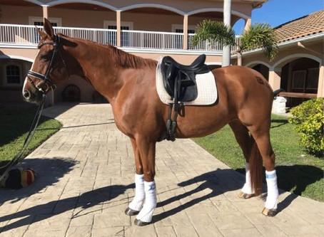 Meet Our Horses: Sarabi!