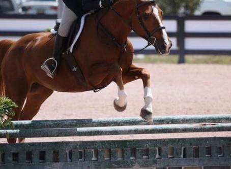 Meet Our Horses: SPR Penelope!