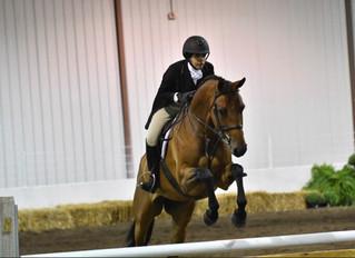 Meet Our Horses: Farandi