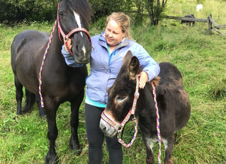Ambassador Interviews: Veronica on Being an Equestrian in Norway!