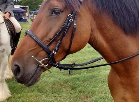 Meet Our Horses: Tess!