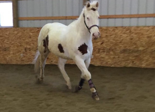 Meet Our Horses: BF Gundownabear