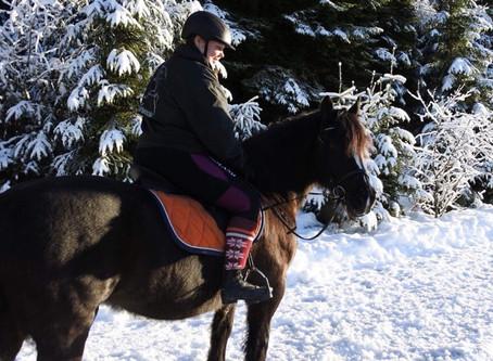 Meet Our Horses: Bliss