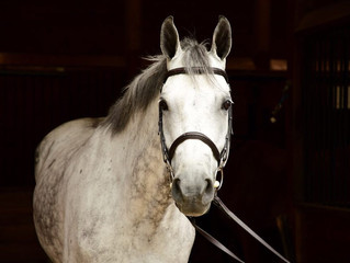 Meet Our Horses: Candy Crush!