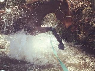 Meet Our Horses: Tango!